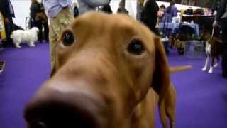 Best Dogs For Families 2