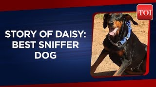 Karnataka's crime-buster dog Daisy dies after seven years of service with police department