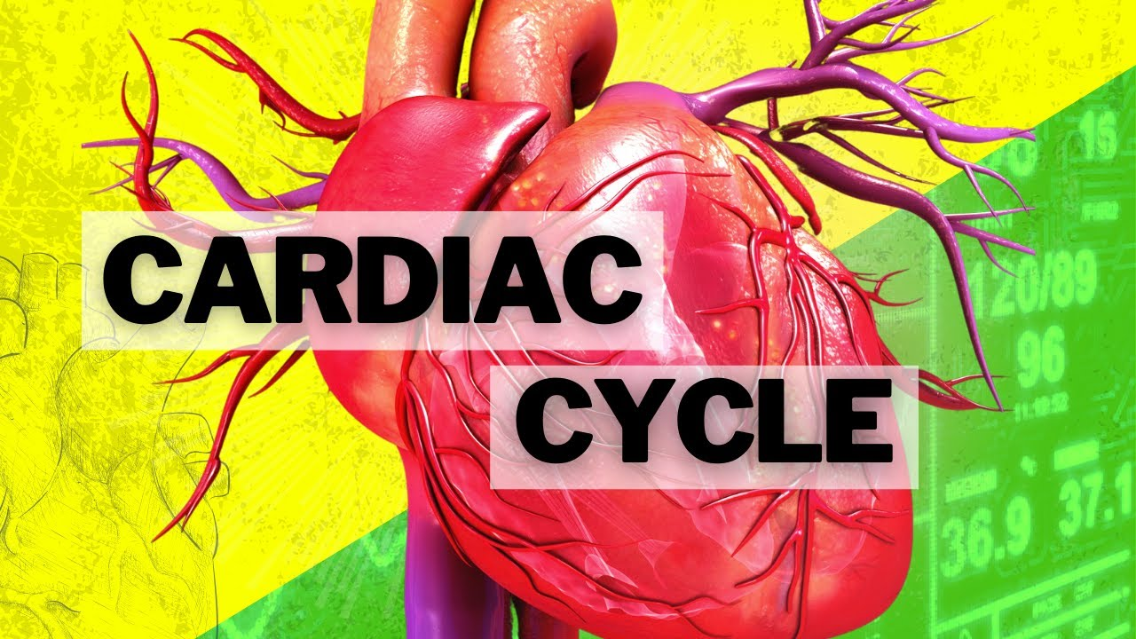 052 The Cardiac Cycle - YouTube