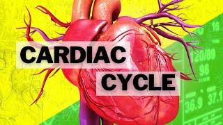052 The Cardiac Cycle