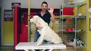 Груминг собак Как удалить колтуны у собак Пуходерка и расческа Ferplast Premium Ферпласт Премиум