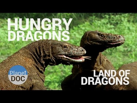 Hungry Dragons. Land of Dragons | Nature - Planet Doc Full Documentaries