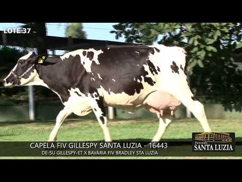 SANTA LUZIA   LOTE 37