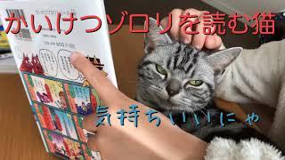 猫のクレアはかいけつゾロリが大好きです。今日もかいけつゾロリの本を読んでいる子供のところに行って一緒に読んでいました。 絵が気に入っているのか本自体がそもそも ...