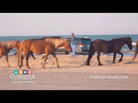 Nature & Wildlife in Currituck County