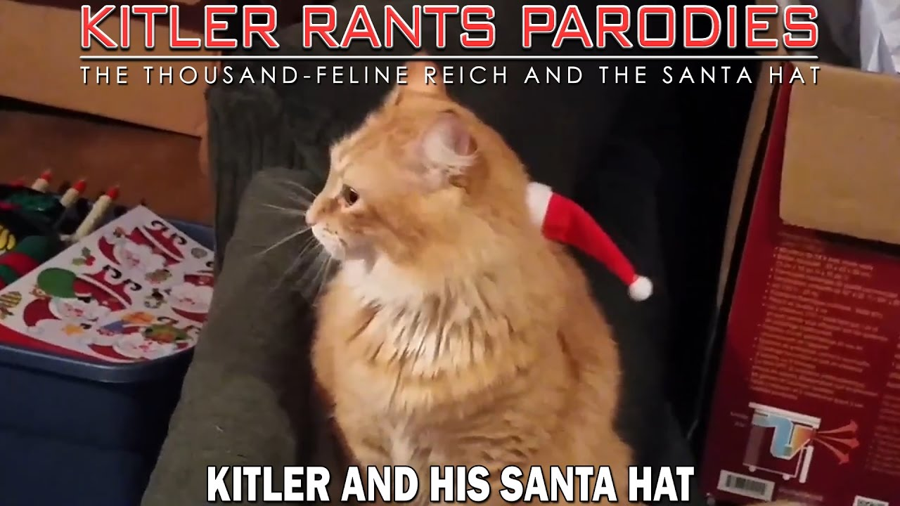 Kitler and his Santa hat