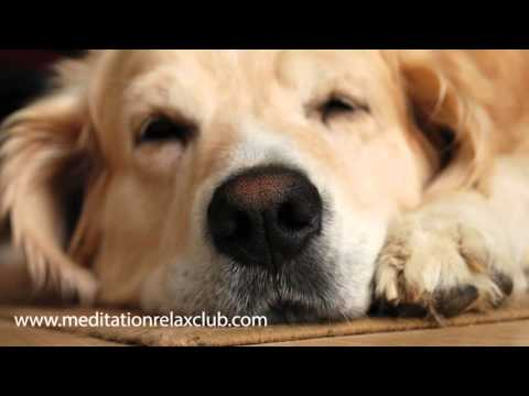 Calming Music for Dogs, Sleep Music Therapy (Protect from Fireworks)