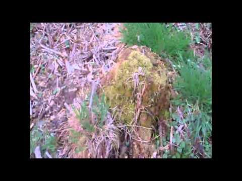Hilfseinsatz Im Andersland: Zaun, Gemüsefeld Und Hügelbeete