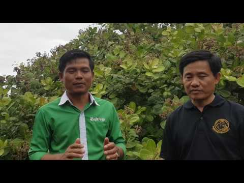 Bopha Organic Agriculture