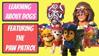 Learning about dogs with Paw Patrol Toys - The Boflet Show - Animal Club - Learning for children
