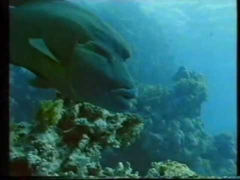 """שוניות , """"תצפית""""  6.1988     Reefwatch Israel"""