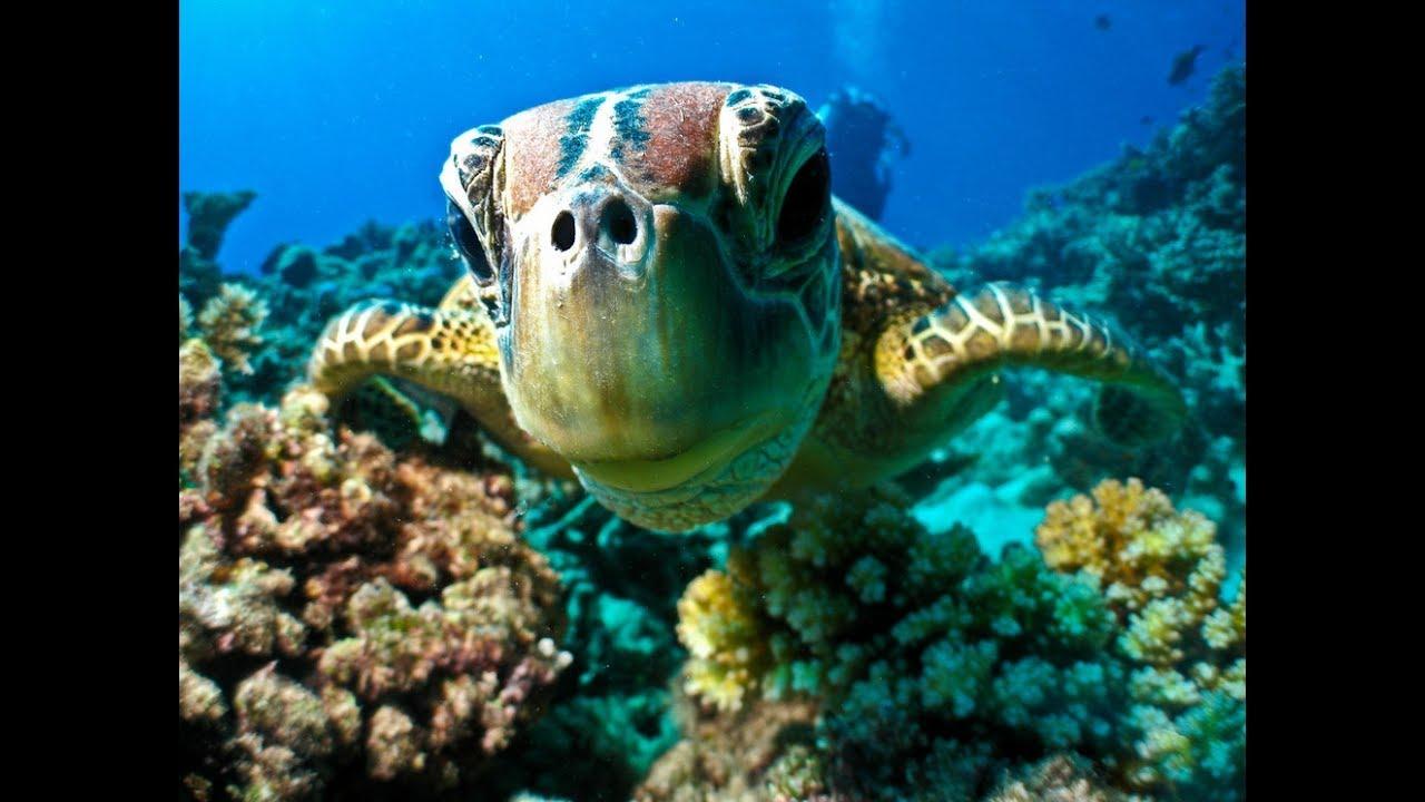 Тайны океана.Подводный мир. National Geographic.