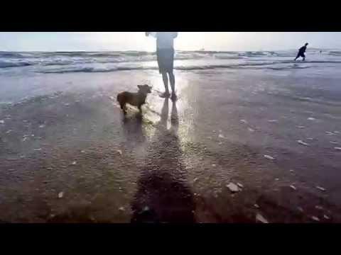 Socal Corgi Beach Day - Fall 2015 - October 24th