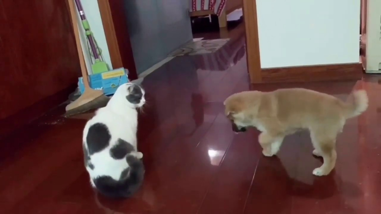 Funny Dog Meeting Cat for the First Time