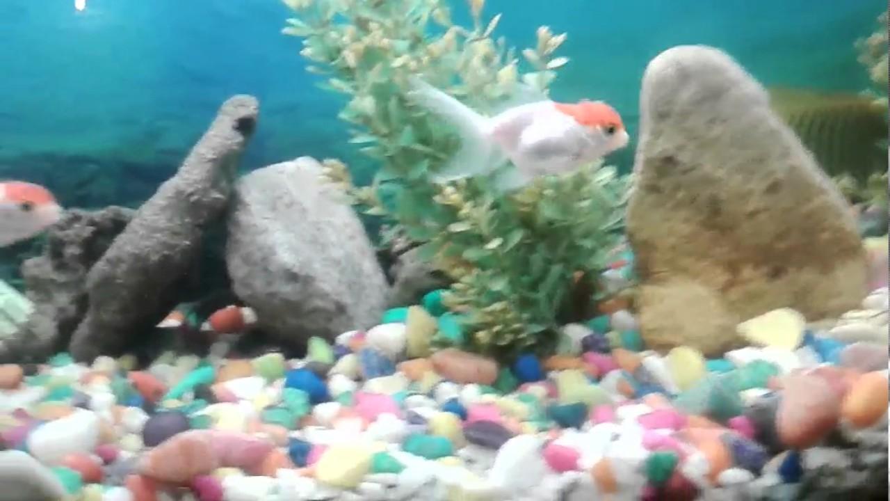 Fish Aquarium - Apne fish aquarium ko saaf kese rakhe
