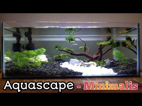 cara-membuat-aquascape-minimalis-!!-low-budget