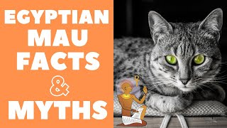 Egyptian Mau Cats 101 : Fun Facts & Myths