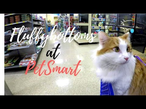 Fluffybottoms the Cat on a Leash Goes to Petsmart