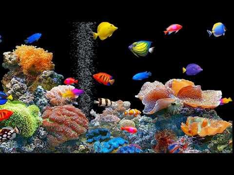 Animated Screen Saver Fishtank Free Download