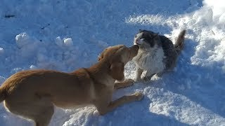 Cute Dog Taffy and Funny Cats