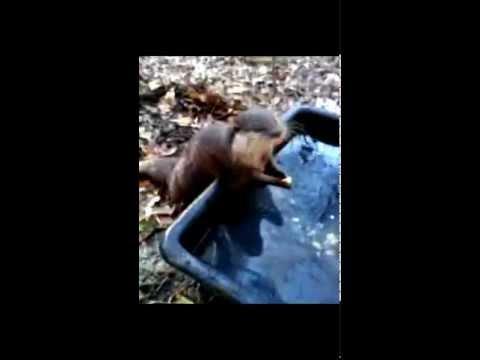 Chubby Otter loves eggs!