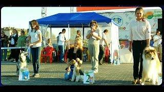 Юный хендлер Ребёнок и собака Выставка собак 16 августа  2015 Барнаул