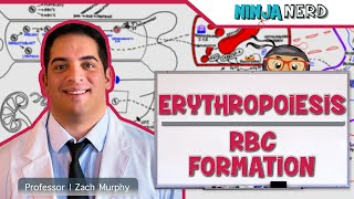 Hematology | Erythropoiesis: Red Blood Cell Formation | Part 1