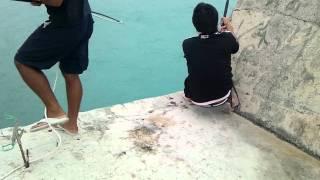 沖縄県宮古島の釣り ロウニンアジ gt giant trevally 37kg okinawa miyakojima fishing 오키나와의 낚시
