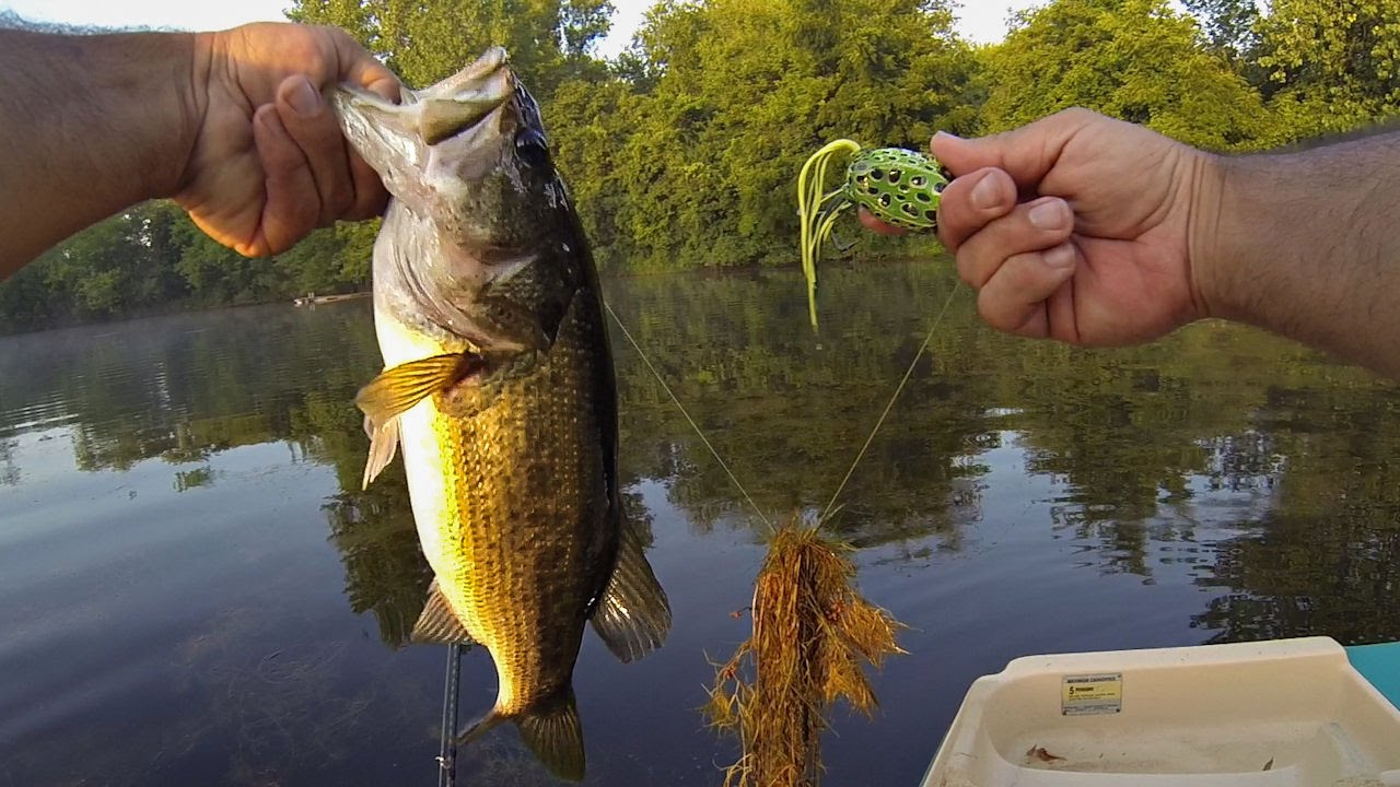15 Best Freshwater Lures - [Useful Reviews, How-Tos