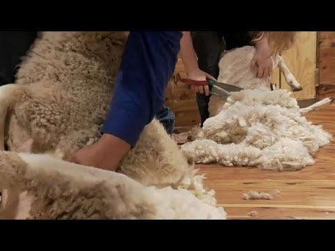 تزايد أعداد العاملات الاستراليات بتصنيع الصوف  - نشر قبل 5 ساعة