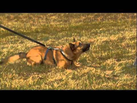 dog training Dog Training Classes by Professional Dog Trainers 0