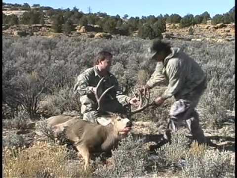huge jicarilla mule deer aaron howells 261 nontypical