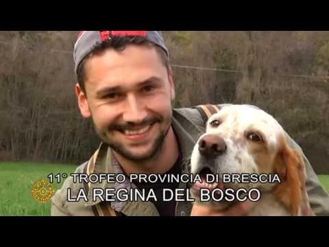 Premiazioni gara cinofila La Regina del Bosco 2016