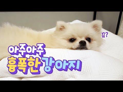아주아주 흉폭한 강아지 thumbnail