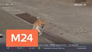 Пес из Японии отметился на картах Google Maps - Москва 24