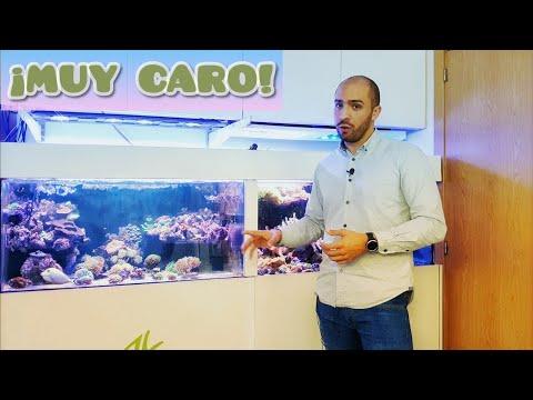 ¡¿por-que-es-tan-caro-un-acuario-marino?!