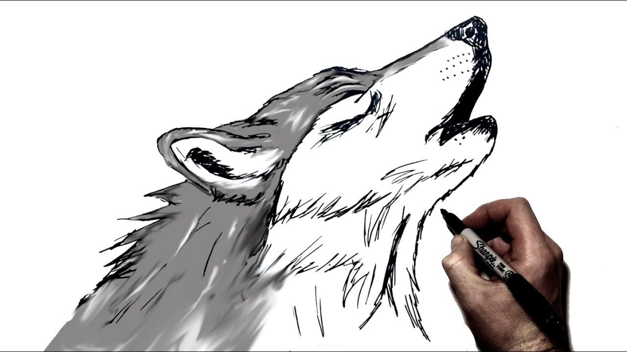 How to Draw A Howling Wolf | Step by Step - YouTube