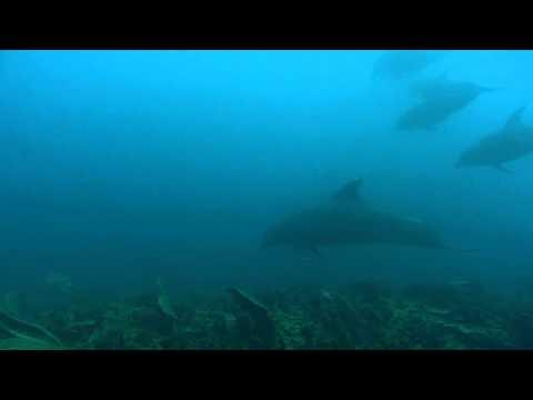 Wild Dolphin Encounter (Tela, Honduras)