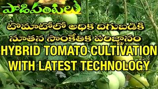 High Yielding Hybrid Tomato Cultivation with Latest technology | Paadi Pantalu