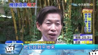 20170511中天新聞 慘! 日名師打造機捷「竹林」造景 2個月後竟枯死