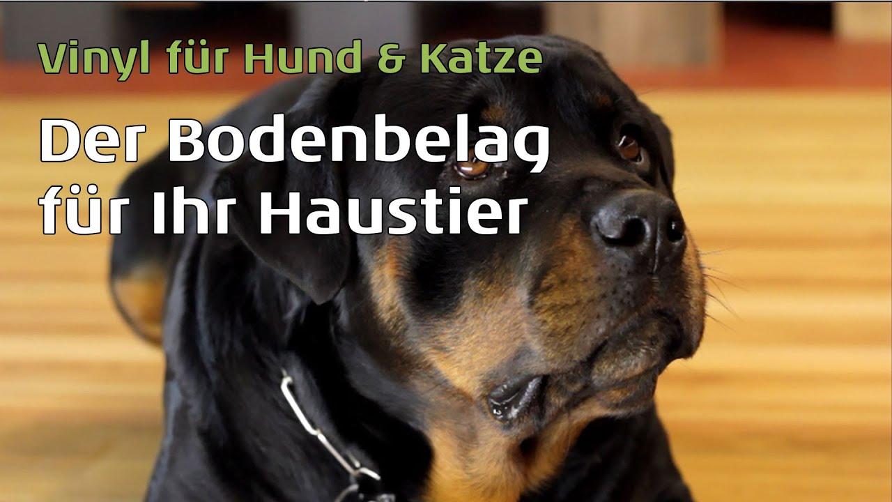 Vinylboden Für Hunde U0026 Katzen Von Parkett Wohnwelt.de   YouTube