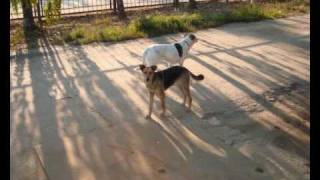 наши верные друзья - собаки