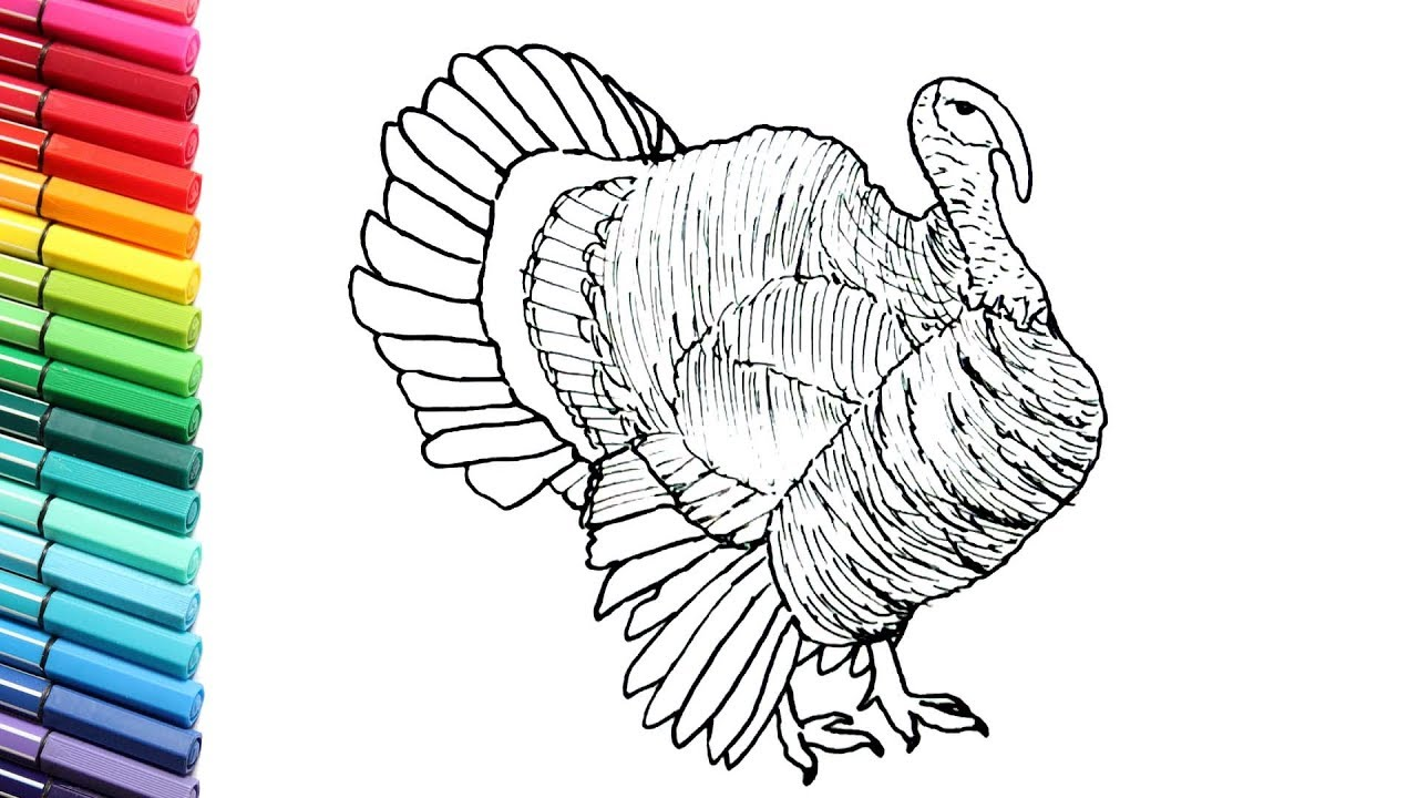 drawing and coloring turkey farm animals names and sound color