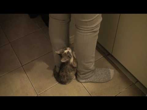 Cute Kitten Does A Trick!!