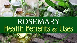 Benefits of Rosemary Herb & Limitless Health Uses - Improves Memory & Immunity - Rosemary Tea