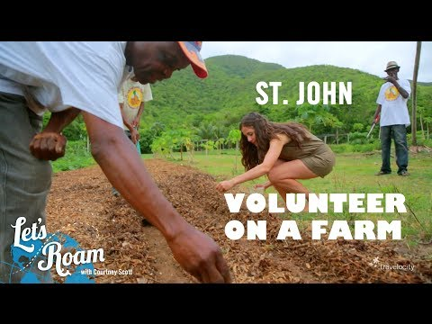 Volunteering in US Virgin Islands (Travel for Good)