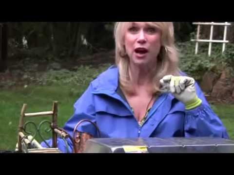 how-to-plant-dahlia-bulbs-in-a-pot---bbm:27621e10---benihbunga.com---grosir-&-eceran