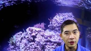 Paul's 240-gallon Reef Aquarium Again?