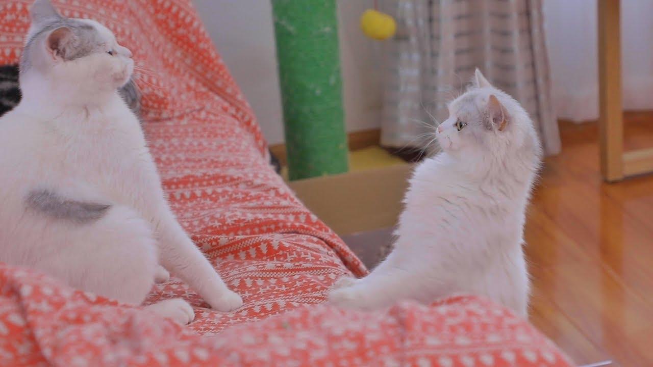 猫咪兄妹俩近一年未见,再次见面差点打架,接下来的互动太有爱了