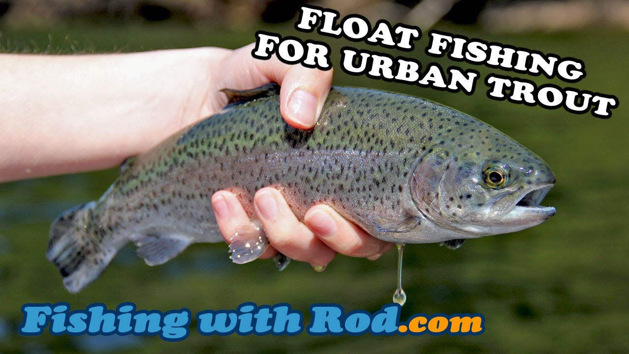 Float Fishing for Urban Trout
